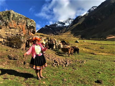 Llama Lares Trek with Green Peru Adventures